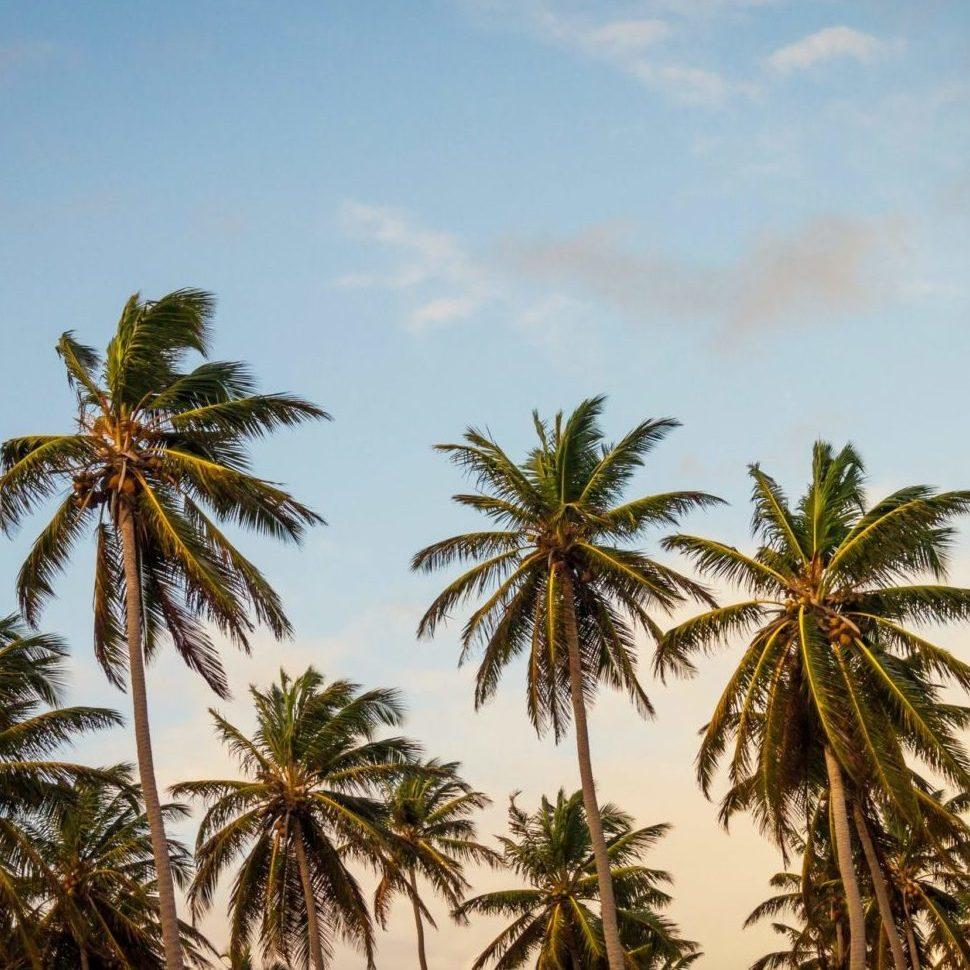 Les Iles Caraïbes Magazine - Crédit : Thomas Lefebvre