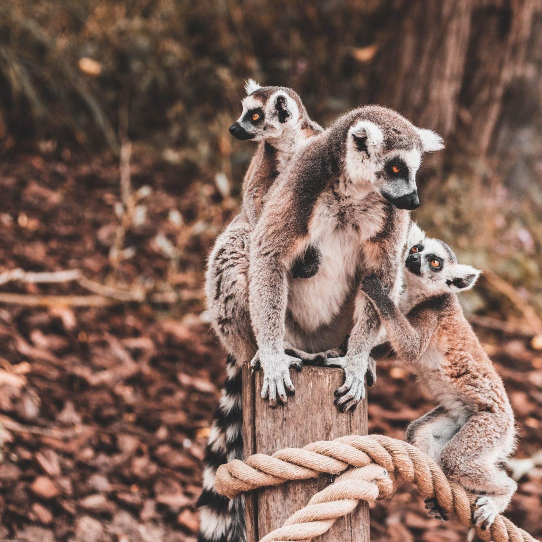 Madagascar - Crédit Roman Laschov